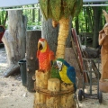 Two Parrots In A Palm Tree