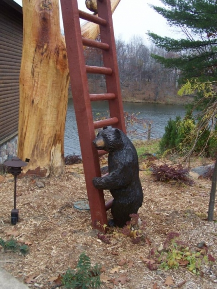 bear-at-a-ladder.jpg