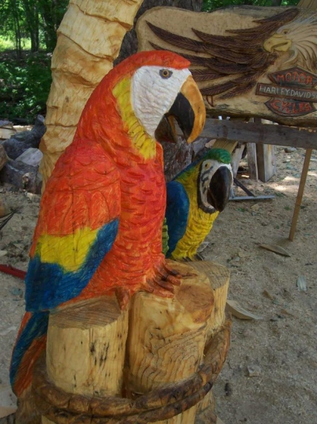 two-parrots-on-a-palm-tree.jpg